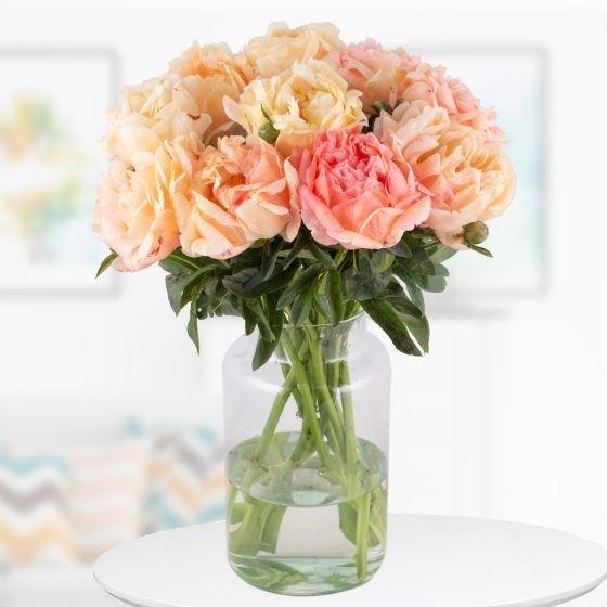 """10 XXL Pfingstrosen in der Farbe """"Coral Sunset"""" für 24,90€ (statt 30€) - Auch mit 14 Rosen möglich!"""