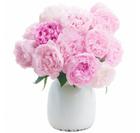 """Blumenstrauß """"Sarah Bernhardt"""" aus 10 Pfingstrosen für 21,98€ inkl. Versand"""