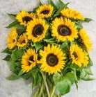 20 Sonnenblumen mit 50cm Länge und großen Blütenköpfen. für 24,98€ inkl. Versand (statt 40€)