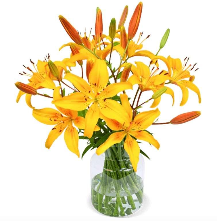 20 gelbe Lilien mit bis zu 60 XXL-Blüten für 24,98€ inkl. Versand (statt 35€)