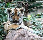 Zoo Leipzig mit 1 ÜN im 4* Hotel + Extras ab 69€ pro Person