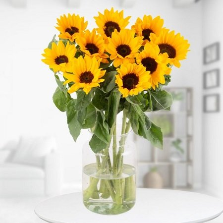 Strauß aus XXL Sonnenblumen (ca. 60cm) für 19,90€ inkl. Versand