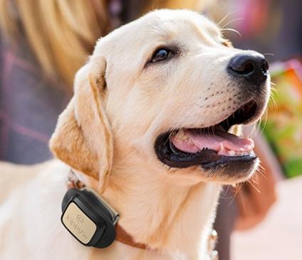 Kippy-Vita GPS-Hundetracker + 12 Monate Datenpaket 10,43€ (statt 106€)