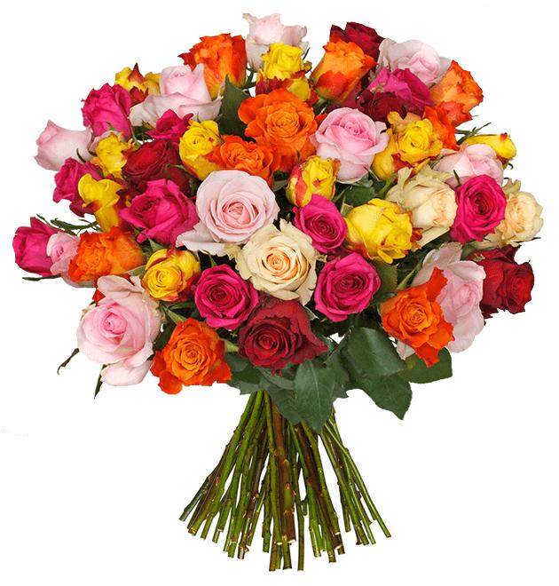 33 RomanticRainbow Rosen für 24,98€ inkl. Versand (statt 36€)