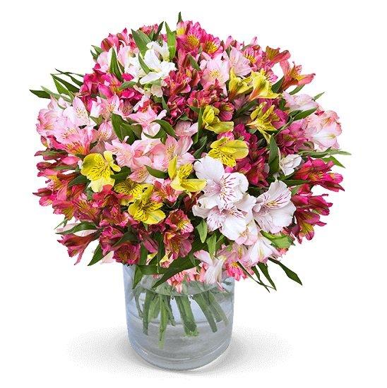 45 Inkalilien mit bis zu 400 Blüten für 24,98€ inkl. Versand