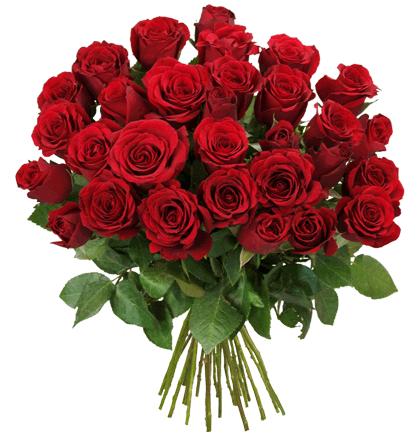 33 rote Rosen (Fairtrade) im Strauß für 19,98€ inkl. Versand