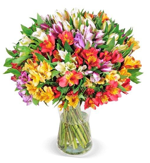 40 Inkalilien mit bis zu 400 Blüten für 27,98€ inkl. Versand (statt 46€)