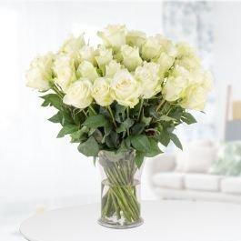40 weiße Rosen (40cm Stiellänge) für 24,90€ inkl. Versand