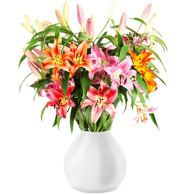 16 bunte Lilien mit über 60 XXL-Blüten für 20,98€ inkl. Versand