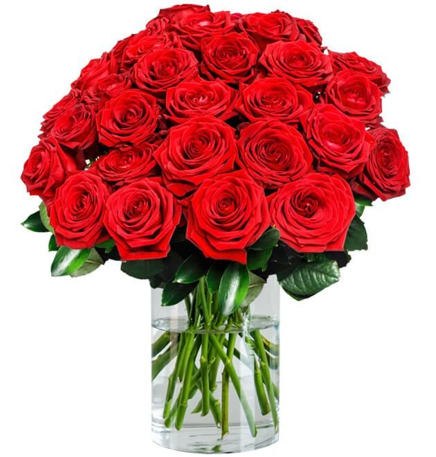 30 Red Naomi Rosen mit XXL Blütenkopf für 29,98€ inkl. VSK