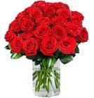 20 Red Naomi Rosen mit XXL Blütenkopf für 22,98€ inkl. Versand (statt 37€)