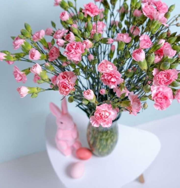 40 rosa Spray-Nelken mit bis zu 400 Blüten für 24,98€ inkl. Versand