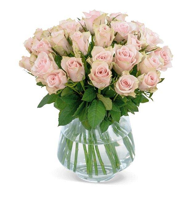35 roséfarbene Rosen im Strauß für 22,98€ inkl. Versand