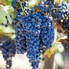 10-tägige Wein- und Ginrundreise inkl. Hotels durch Norditalien für 499€ p.P.