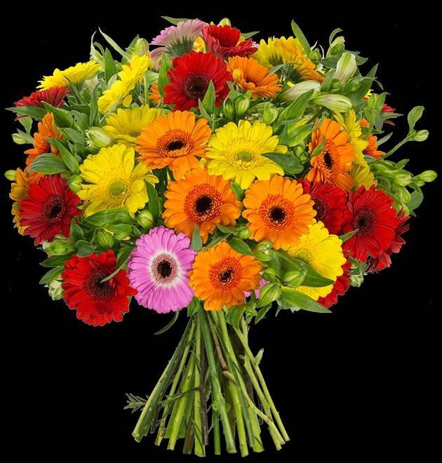 Exotischer Blumengruß: Thinking Of You aus 15 bunten Gerbera und 15 Inkalilien für 24,98€