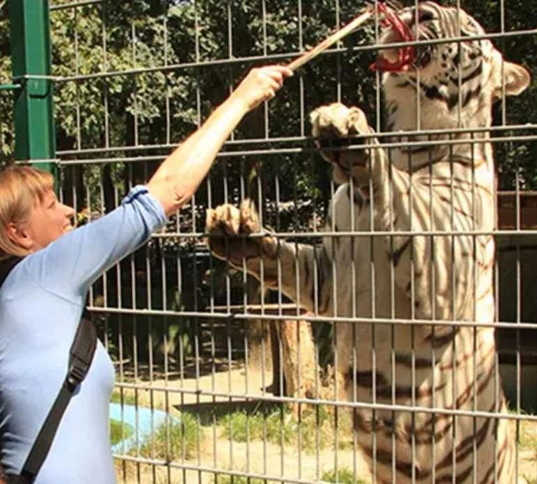 Groupon: Tagestickets für den Filmtier-Park Eschede: 2 Erwachsene ab 13€, Familien ab 25€ – Kids bis 3 Jahre frei!