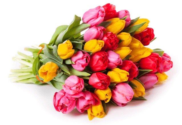 50 bunte Tulpen im Strauß für 24,98€ inkl. Versand