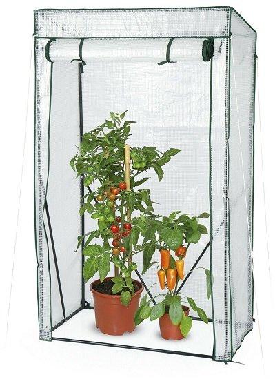Hohberg Tomaten Gewächshaus