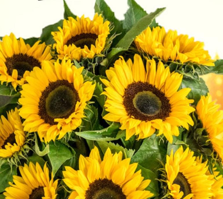 15 Sonnenblumen im Strauß für 20,98€ inkl. Versand