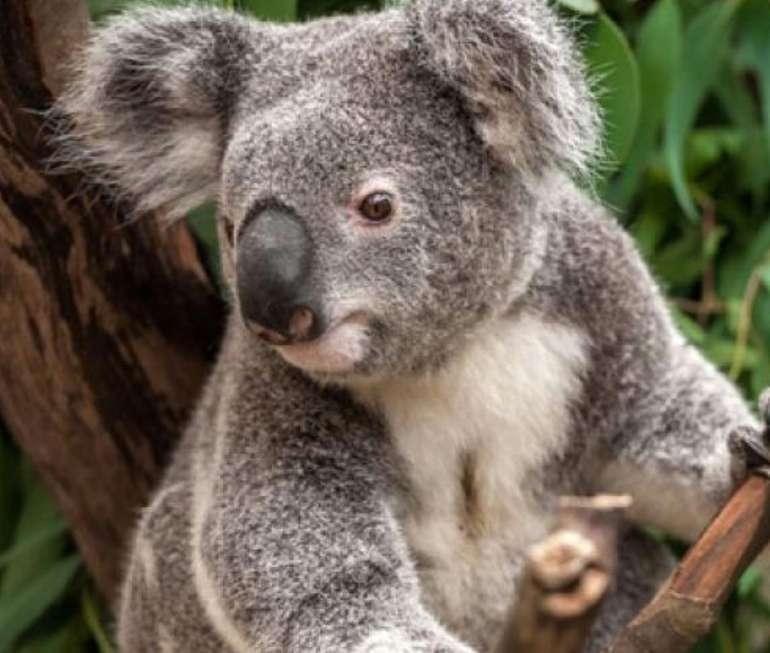 Zoo Leipzig mit Übernachtung im Premium Hotel nach Wahl schon ab 130€ für 2 Erwachsene