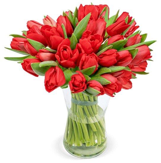 40 rote Tulpen im Strauß für nur 24,98€ inklusive Versand