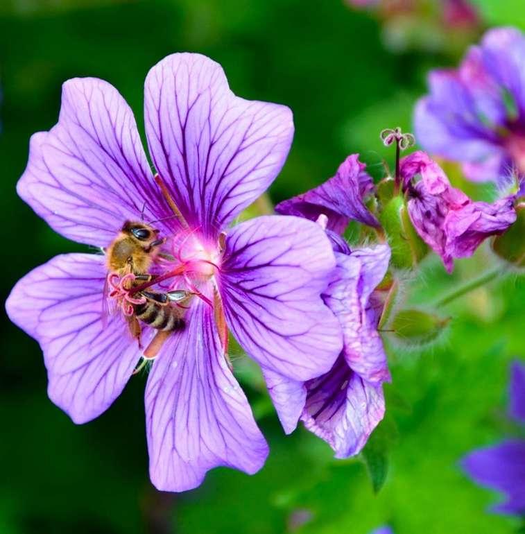 Ein Samentütchen gegen das Bienensterben kostenlos bestellen