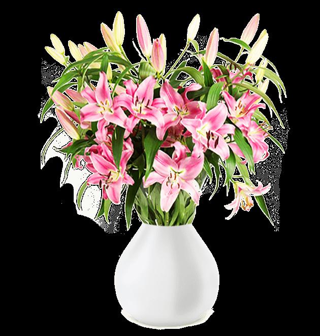 17 pinke Lilien (bis zu 60 Blüten) für 19,98€ inkl. Versand
