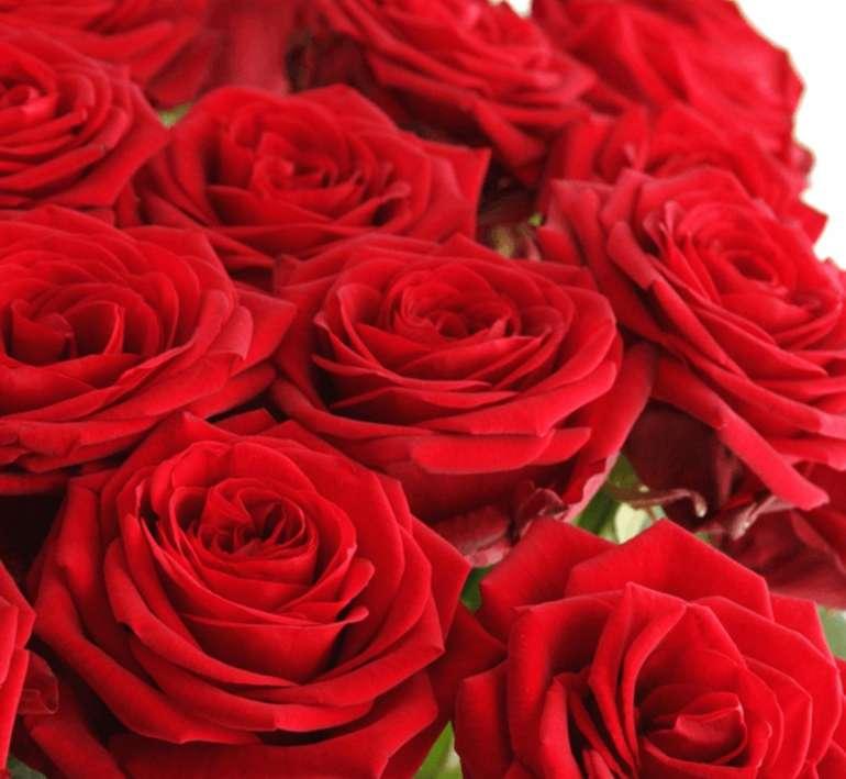 Blume Ideal: Red Roses Week mit roten Rosen im Strauß ab 24,98€ inkl. Versand