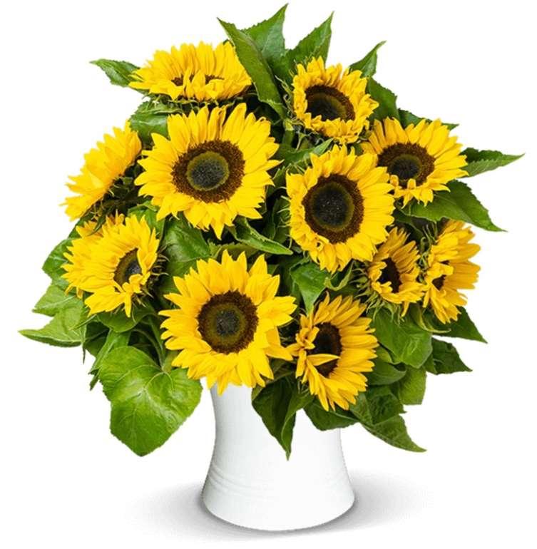 17 Sonnenblumen im Bund für 25,98€ inkl. Versand (statt 40€)