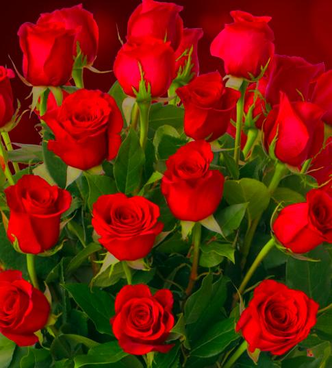 Günstige Blumen: 20% Rabatt auf alles bei BlumeIdeal - denkt an Valentinstag!