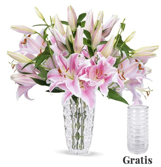 15 pinke Lilien mit XXL Blüten inkl. Vase für 22,98€ inkl. Versand