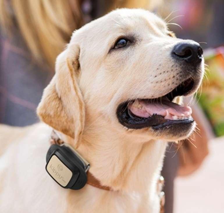 Kippy-Vita GPS-Hundetracker + 12 Monate Datenpaket für 9,99€ (statt 90€)