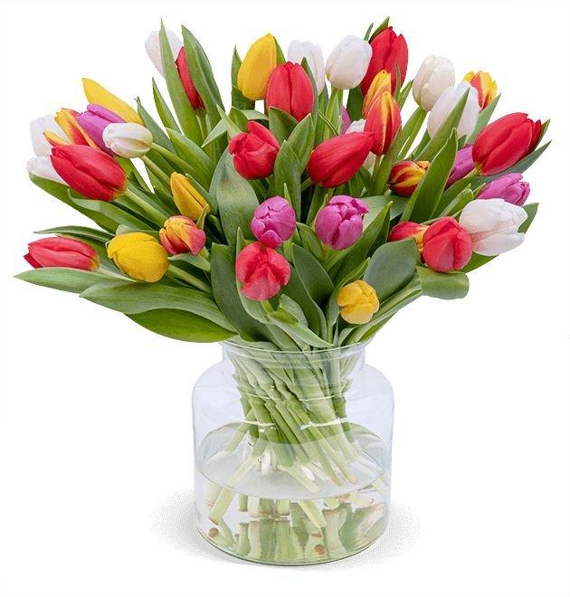 44 bunte Tulpen im Strauß für 22,98€ inkl. Versand