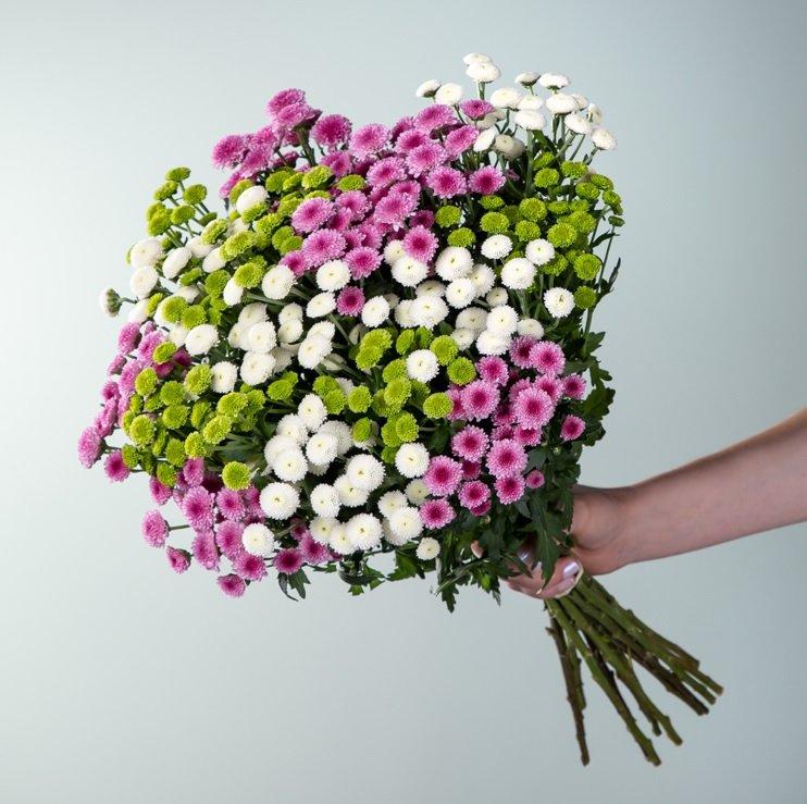 Chrysanthemen Mix Madiba Blumenstrauß für 10€ inkl. Versand (statt 20€) - Neukunden!