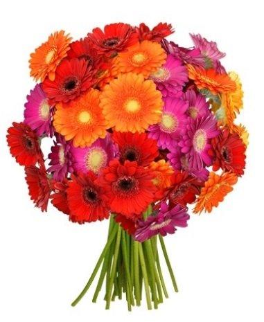 37 bunte Gerbera Blumen mit 50cm Länge für 21,98€ inkl. Versand