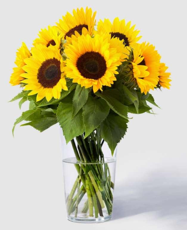 Blume2000: 10 Sonnenblumen für 10€ inkl. Versand (statt 20€) - Neukunden!