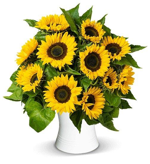 Farbtastisch: 20 Sonnenblumen mit einer Länge von bis zu 50cm für 22,98€