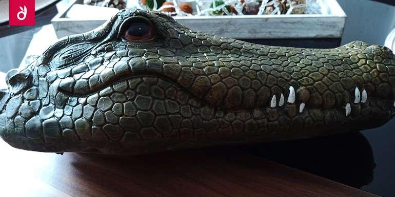 Kroko1