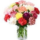 40 bunte Nelken für 22,98€ inkl. Versand bei BlumeIdeal