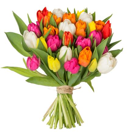 35 bunte Tulpen mit 40cm Stiellänge für 18,98€ inkl. Versand