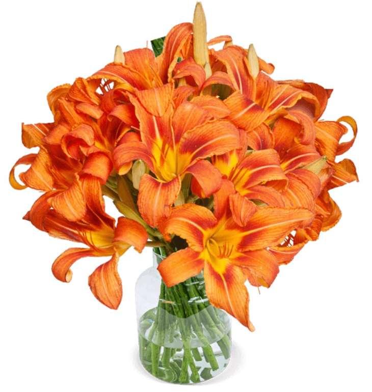 20 orange Lilien mit XXL Blüten für 24,98€ inkl. Versand (statt 35€)