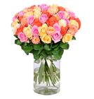 Blume Ideal: Blumenstrauß mit 44 bunten Rosen für 24,98€ inkl. Versand
