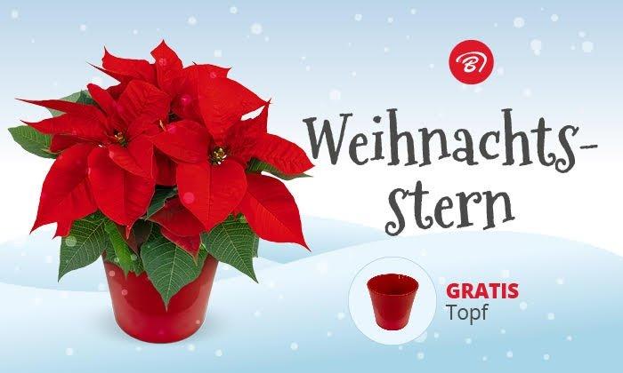Groupon: 11€ Blume Ideal Wertgutschein für 3,50€