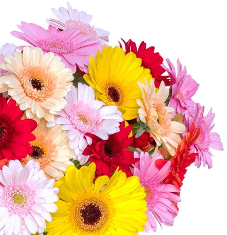35 bunte Gerbera Blumen mit 50cm Stiellänge für 24,98€ inkl. Versand