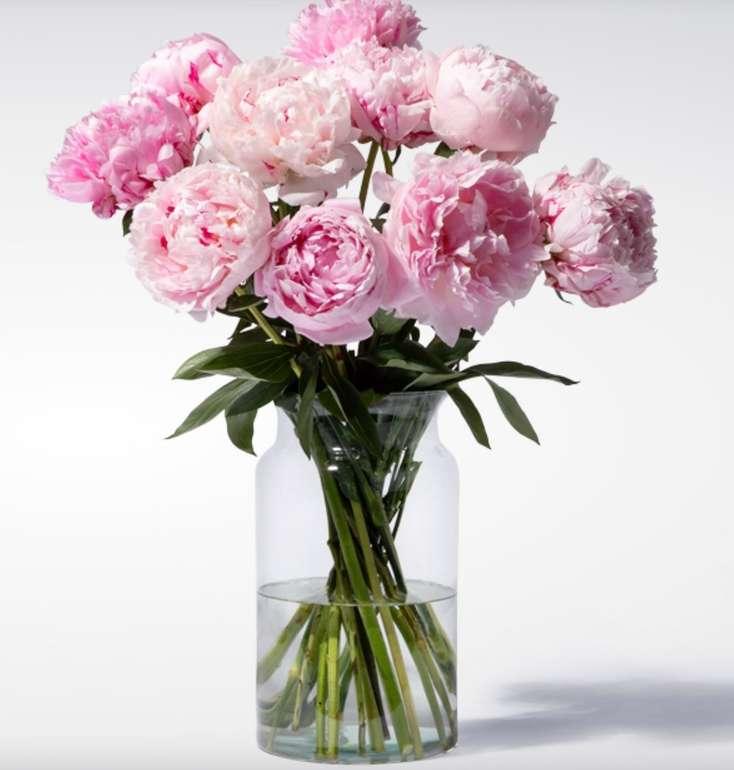 10 Pfingstrosen in Rosa für 10€ inkl. Versand (statt 15€)