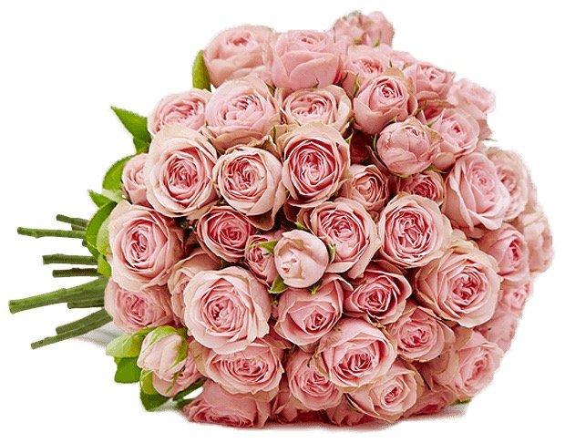"33 rosa Rosen im Strauß ""LovelyRoses"" für 20,98€ inkl. Versand"
