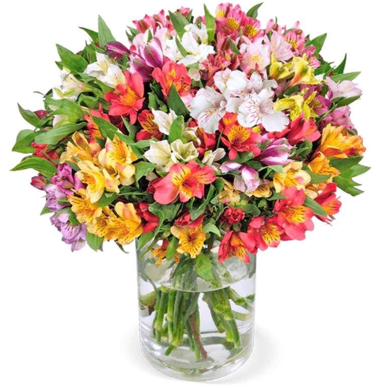 40 Inkalilien mit bis zu 400 Blüten für 25,98€ inkl. Versand (statt 46€)