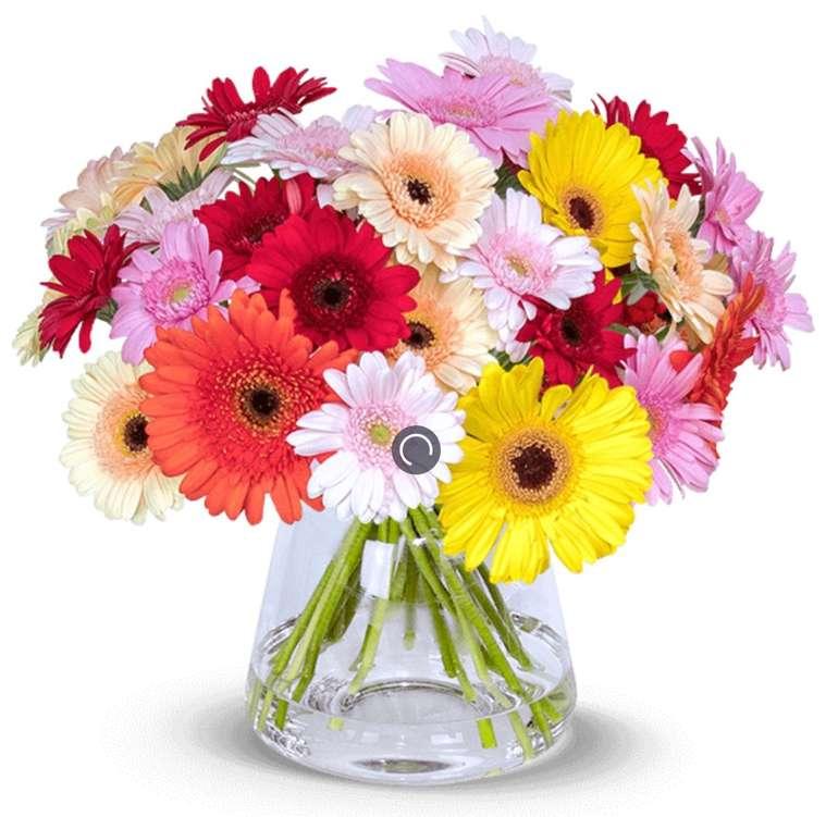 40 bunte Gerbera Blumen mit 50cm Stiellänge für 24,98€ inkl. Versand