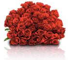 """44 rote Rosen im Strauß """"ClassicRed"""" für nur 24,98€ inkl. Versand"""