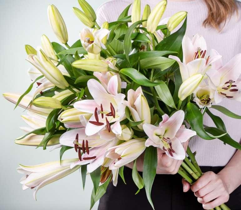 Blume2000: 7 Freiland Lilien mit langem Stiel für 10€ inkl. Versand (statt 20€)